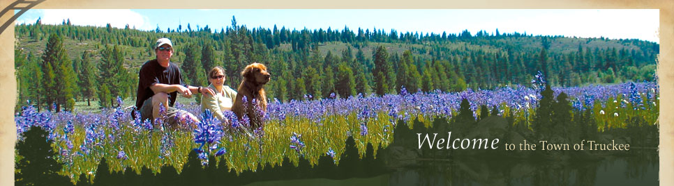 Dog in Field Welcome Banner