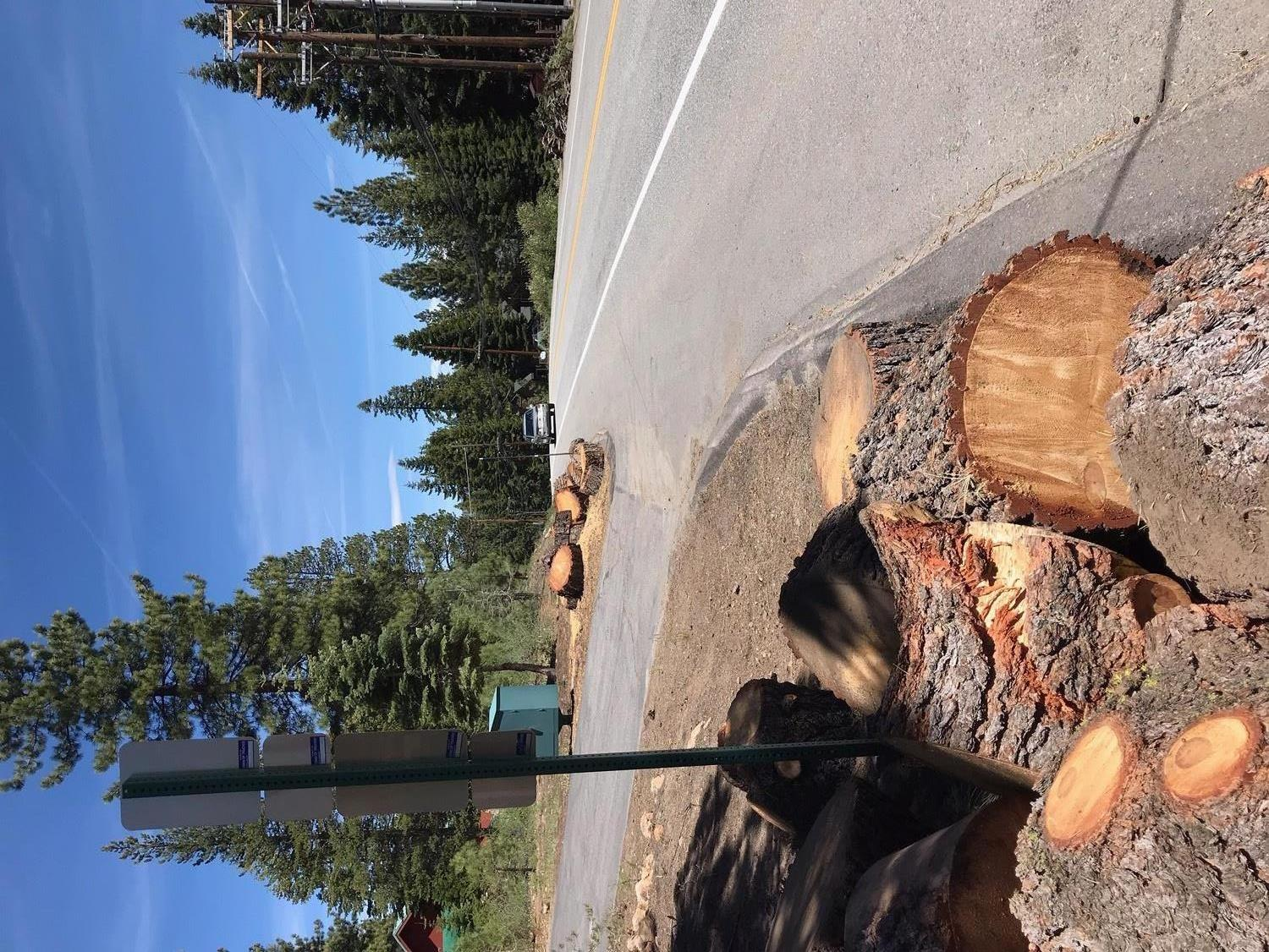 Log Rounds on Side of Road in TD